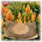 Семена амаранта высокой категории качества